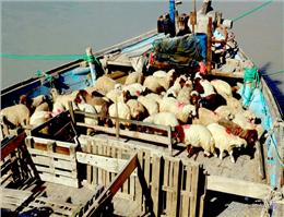 واردات 10میلیون تن نهاده های دامی از بندرامام