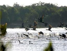 مهجوریت اکوتوریسم در پارک ملی دریایی نای بند