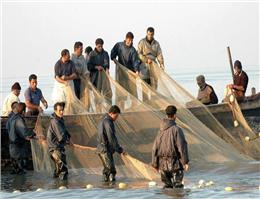 10 هزار صیاد، صید ماهیان دریای خزر را آغاز کردند