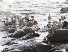 افزایش مناطق دریایی تحت حفاظت پارک ملی دیر-نخیلو