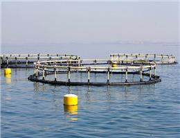 سهم هفت هزار تنی هرمزگان از تولید ماهی در قفس