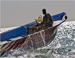 صیادان بوشهری 277 تن ماهی مرکب صید کردند