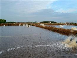 تولید میگو در گناوه 44 درصد افزایش یافت