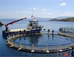 طرح پرورش ماهی در قفس در جزیره مینو اجرا می شود
