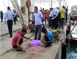 تخلیه 8 هزارتن ماهی صنعتی دراسکله صیادی بوشهر
