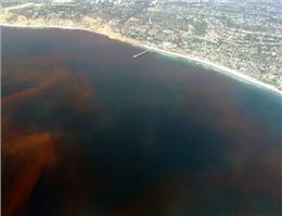 اقدامات سازمان بنادر در مقابله با آلودگی سواحل مکران