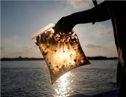 هشدار؛آلودگی میکروبی آب دریا در آستارا