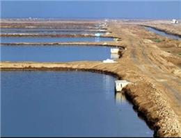 20 هزار تن میگوی پرورشی در بوشهر تولید می شود