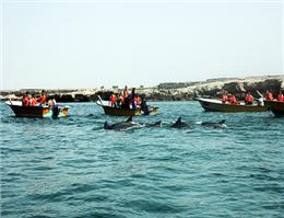 48 هزار نفر در ایام نوروز از جزیره هنگام دیدن کردند
