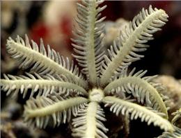 درمان ایدز با مرجان دریایی