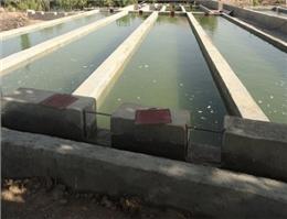 تولید بیش از 40 هزار تن انواع  ماهیان گرمابی در مازندران