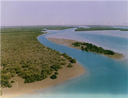 کاهش انرژی امواج توسط جنگل های مانگرو