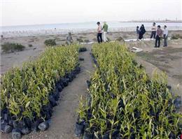 آغاز کاشت 2 هزار نهال حرا در سواحل خوزستان