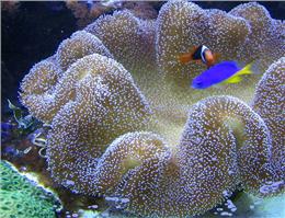 وضعیت مرجانهای چابهار روز به روز بدتر می شود