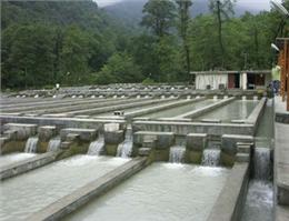 پیش بینی افزایش 100 درصدی تولید میگو در گلستان