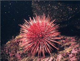 مقابله با هجوم توتیان دریایی در آبهای خارگ