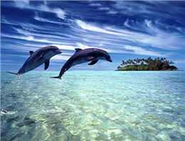 برگزاری کلاس های آموزش حفاظت از دلفین ها در قشم