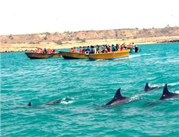 خدمات گردشگری جزیره قشم در انحصار واحدهای مجاز