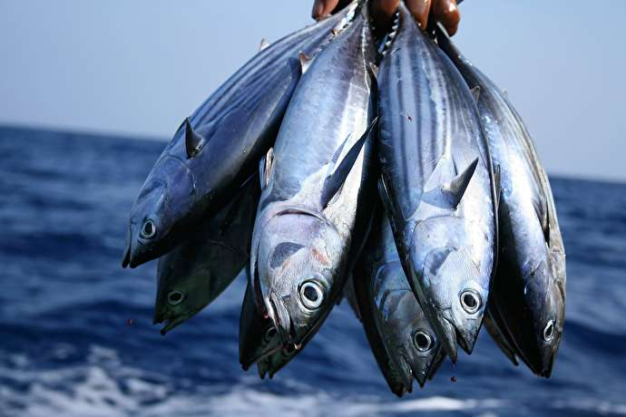 Norwegians to Develop Iran's Fisheries